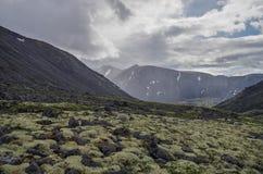 有用地衣和岩石的山寒带草原盖的青苔, Hibi 免版税图库摄影