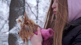 有用敞篷盖的长发的画象青少年的女孩拥抱在羊毛毛线衣藏品狗穿戴的约克夏狗  影视素材