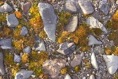 有用青苔盖的石头的道路 免版税库存照片