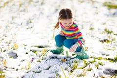 有番红花的小女孩在春天开花在雪下 库存照片