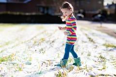 有番红花的小女孩在春天开花在雪下 库存图片