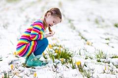 有番红花的小女孩在春天开花在雪下 免版税库存照片