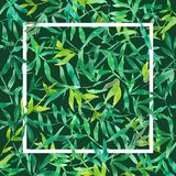 有白方块框架的,水彩植物背景例证绿色竹叶子 皇族释放例证