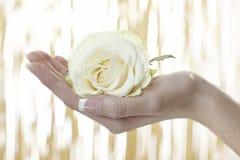 有白玫瑰的人的手 免版税库存图片