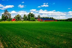 有白色修剪的传统红色农厂房子谷仓在有蓝天的开放牧场地在芬兰 免版税图库摄影