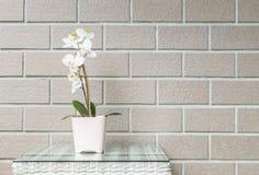 有白色兰花花的特写镜头人为植物在木织法桌上的桃红色花盆在被弄脏的棕色砖墙纹理backg 免版税库存图片