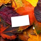 有白色卡片的秋天多色叶子 库存图片