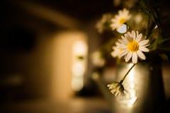 有白色叶子的开花和黄色在中部 免版税库存照片
