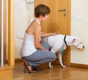 有白色大狗的妇女 免版税图库摄影