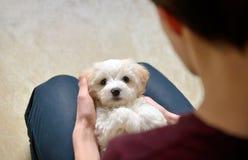 有白色小狗马耳他狗的青少年的男孩 免版税库存图片