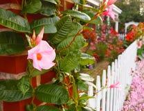 有白色尖桩篱栅的花园 免版税库存照片