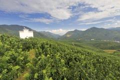 有白色房子的柚子种植园 免版税库存图片
