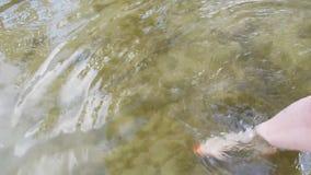 有白色皮肤和红色修脚的女性腿在干净的水的11s弄湿 股票录像