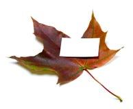 有白色空的名片的多色秋天槭树叶子 免版税库存照片