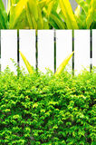 有白色篱芭的绿色植物 免版税库存图片
