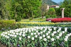 有白色郁金香的美丽的植物园 免版税库存照片