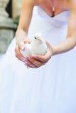 有白色鸽子的新娘 免版税库存图片
