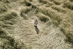 有白色,蓝色礼服的性感的妇女审阅黑麦领域 图库摄影