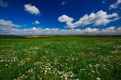 有白花和夏天蓝天的开花的草甸与在漂泊Moravian高地的白色云彩在日落,捷克repub期间 图库摄影