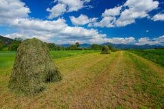 有白花和夏天蓝天的开花的草甸与在漂泊Moravian高地的白色云彩在日落,捷克repub期间 库存图片