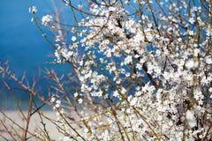 有白花的布什在水附近的海滩 库存照片