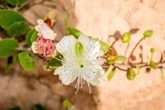 有白花的庭院 免版税库存图片