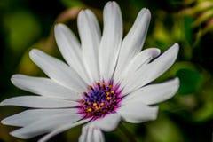 有白花的庭院 库存图片