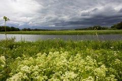 有白花的森林草甸 免版税图库摄影