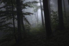 有白花的黑暗的森林在清洁 免版税库存照片