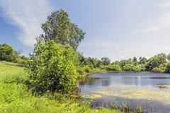 有百合的一个池塘 免版税图库摄影