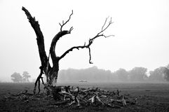 仅有的结构树 免版税库存图片