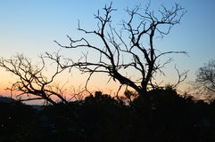 仅有的结构树 免版税图库摄影