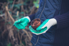 有盆栽植物的手套的手 库存图片
