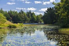 有睡莲叶的湖 库存照片
