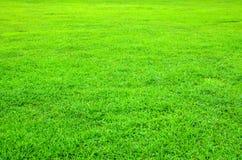 有短的草的绿色草坪背景的 免版税库存图片