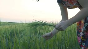有短的黑发的美丽,可爱的欧洲女孩在与花的短裙打破绿色黑麦 股票录像