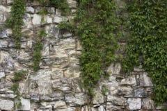 有石南花的石老墙壁 背景做石石头纹理墙壁白色 在老中世纪砖的岩石块 免版税库存图片