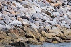 有石头块的水坝保护的免受海猛冲 免版税库存照片