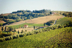有石房子的,托斯卡纳,意大利葡萄园 免版税图库摄影