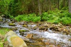 有石头和蕨的河在森林里在夏天 图库摄影