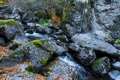 有石头和青苔的森林河 库存图片