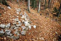 有石头和崩裂的棕色叶子的欧洲落叶林我 免版税库存图片