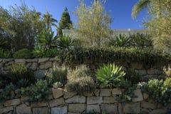 有砂岩墙壁的一个被修剪的加利福尼亚庭院 免版税库存图片