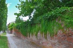 有砖的篱芭 库存照片