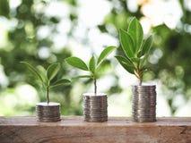 有硬币的植物在表上 免版税库存照片