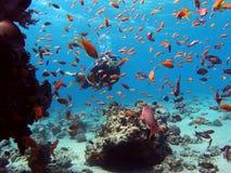 有礁石鱼的潜水者 免版税库存图片