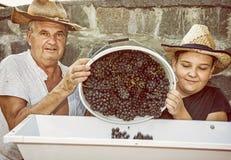 有祖父的十几岁的男孩撒布葡萄,黄色fil 免版税库存图片
