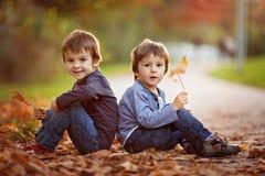 有秋叶的可爱的小男孩在秀丽停放 免版税库存照片