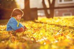 有秋叶的可爱的小男孩在秀丽公园 图库摄影