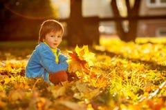 有秋叶的可爱的小男孩在秀丽公园 免版税图库摄影